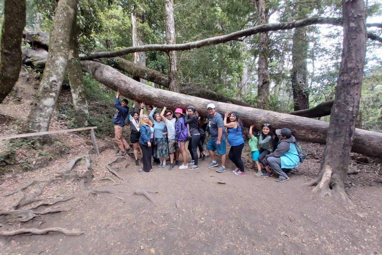 Bosque nativo Huilo Huilo
